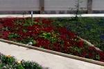 فتوکلیپ باغ گلهای نجف آباد